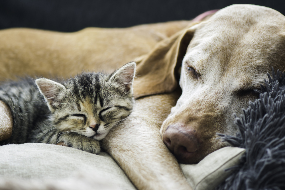 old dog and young cat sleeping