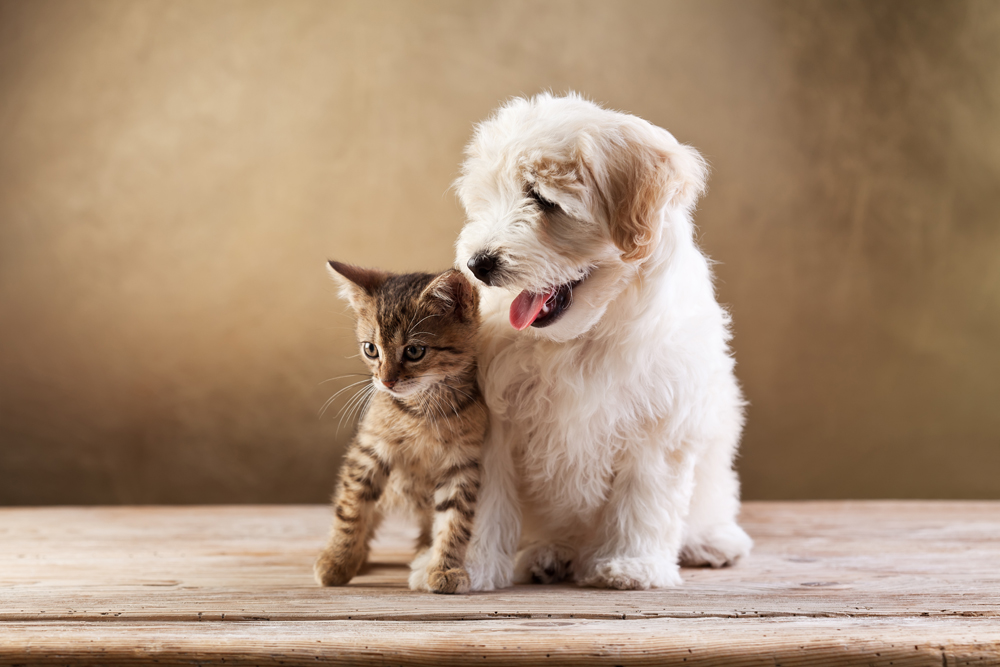 puppy and kitten packages